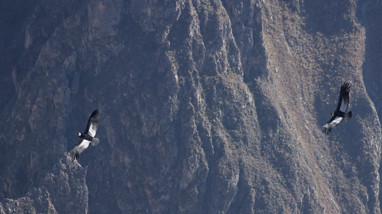 Peru Mystical- Majestic Colca Canyon, explore
